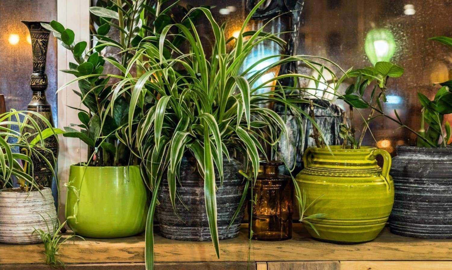 10 Hard to Kill House Plants: A Guide for Those Without a Green Thumb