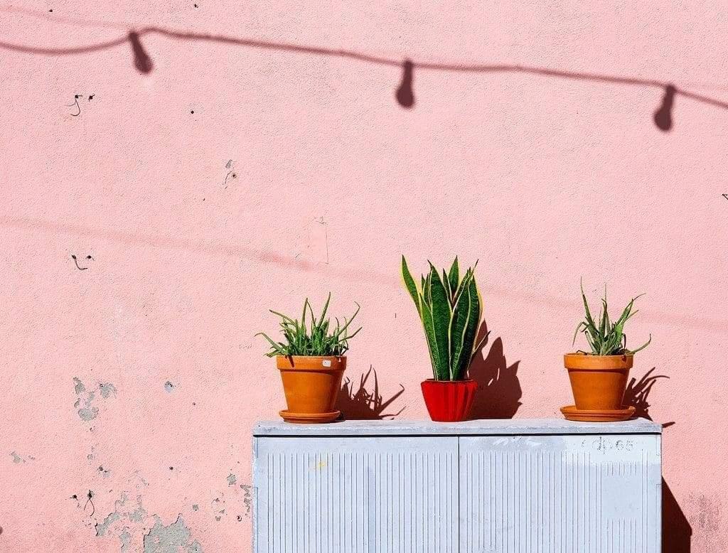 Succulent Magic: Creative DIY Projects