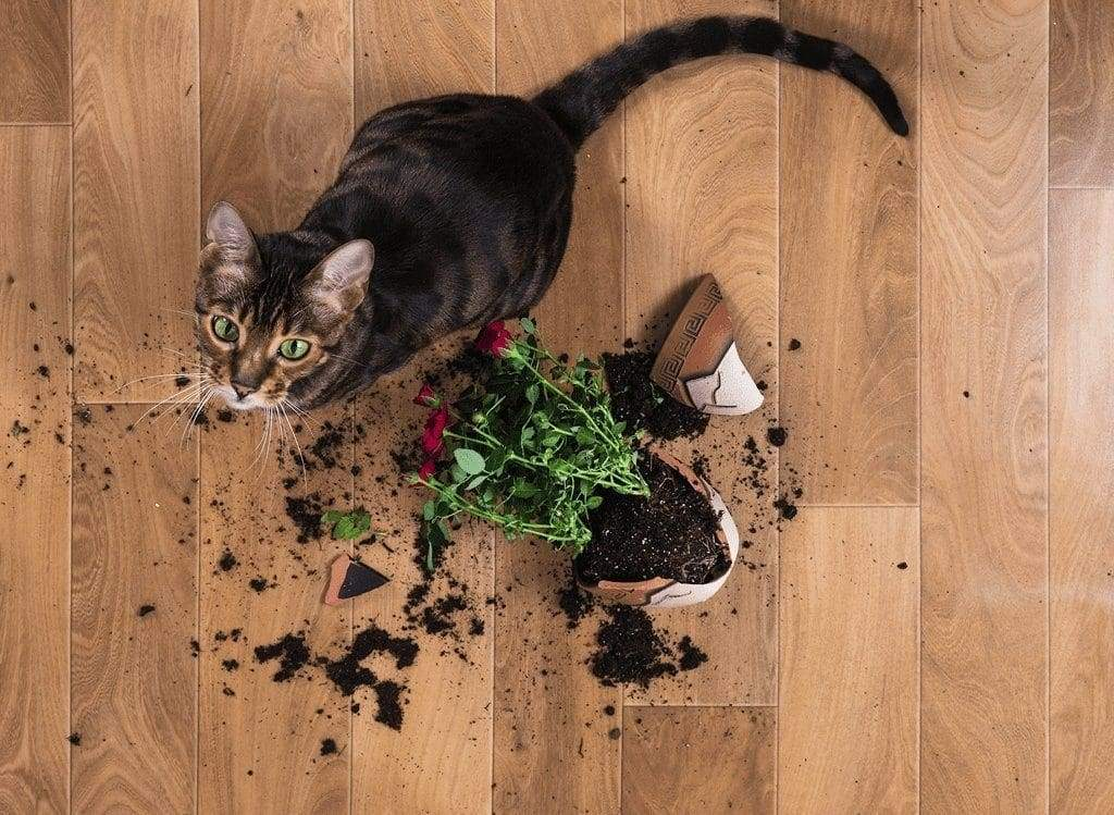 10 Tips for Protecting Your Indoor Plant Shelf from Your Feline Friend
