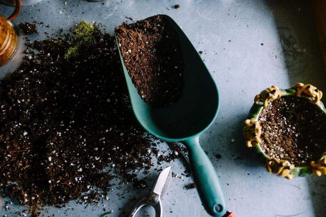 How Do I Know What the Best Potting Soil for My Houseplant Is?