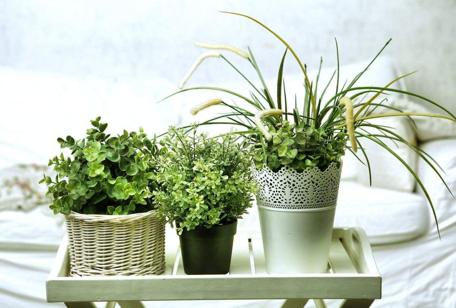 How to Meet the Nutrient Needs of Your Indoor Plant