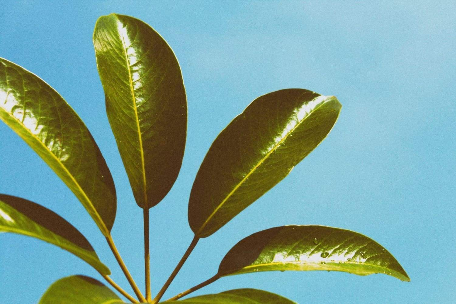 How Much Light Does a Houseplant Need?