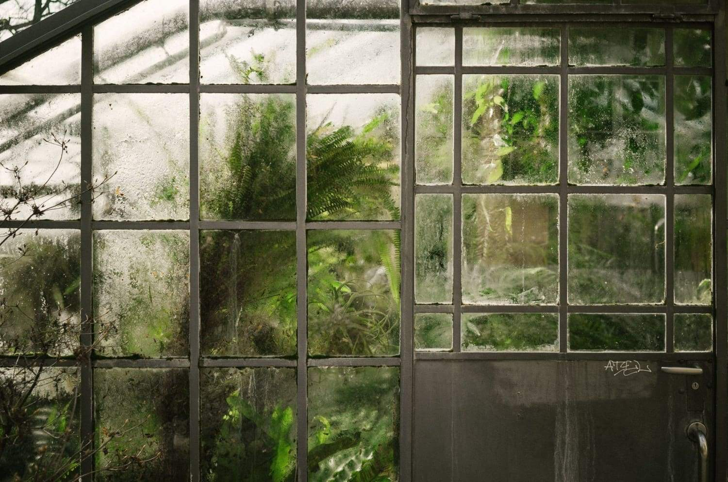 Do Indoor Plants REALLY Improve Our Health?