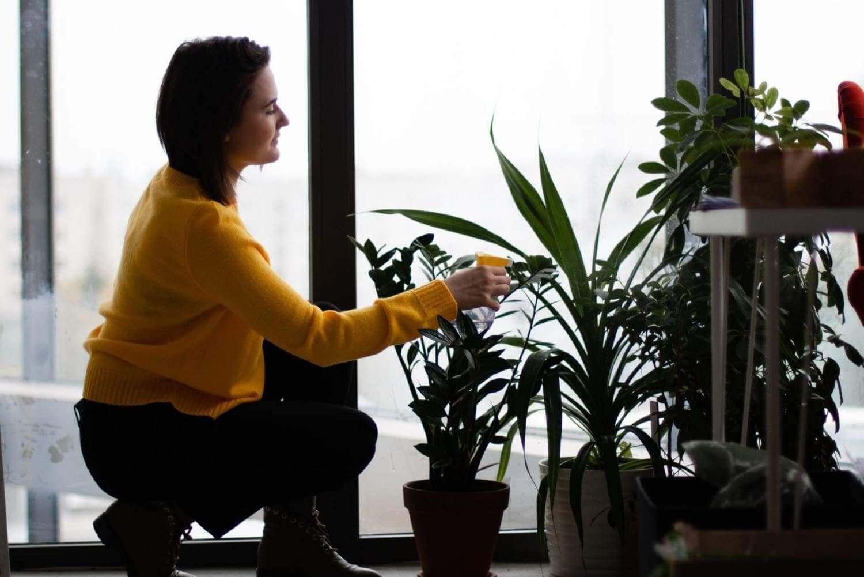 How to keep indoor plants alive 101