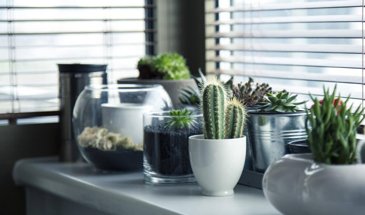 Here's Why Indoor Succulents Belong in Your Home