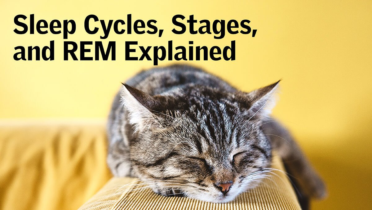Sleep Cycles, Stages, and REM Explained