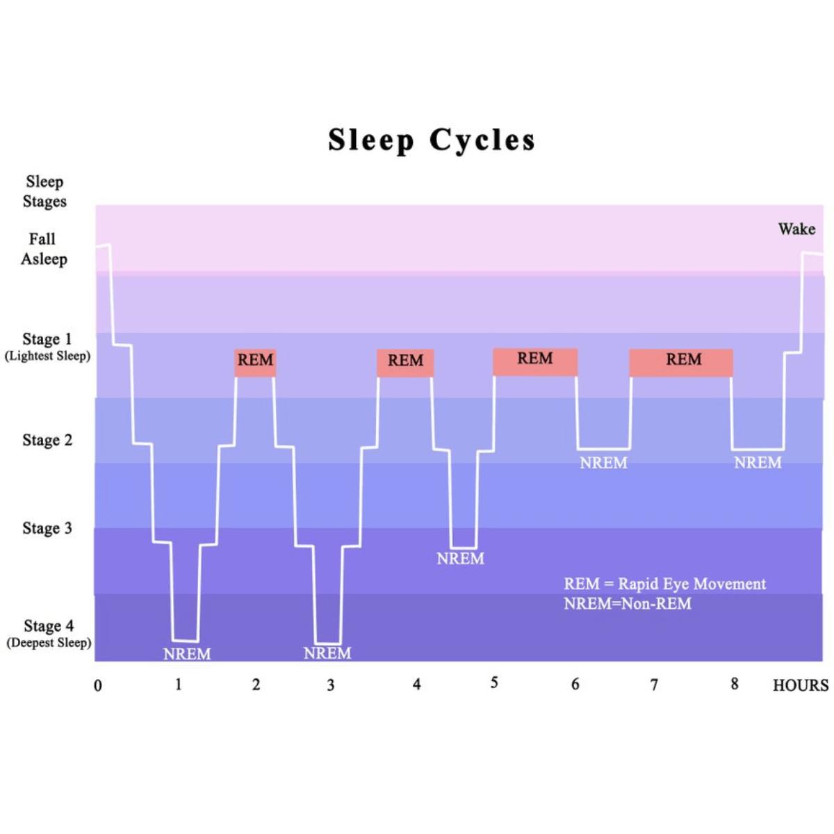 sleep cycles chart - rem sleep
