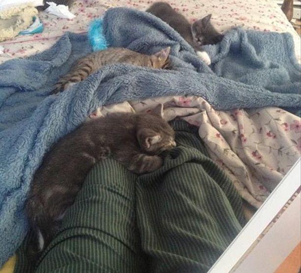 chat qui dort sur moi