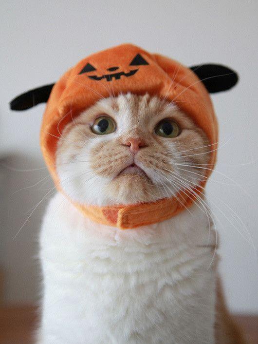 10 costumes de chats qui vont vous faire aimer Halloween