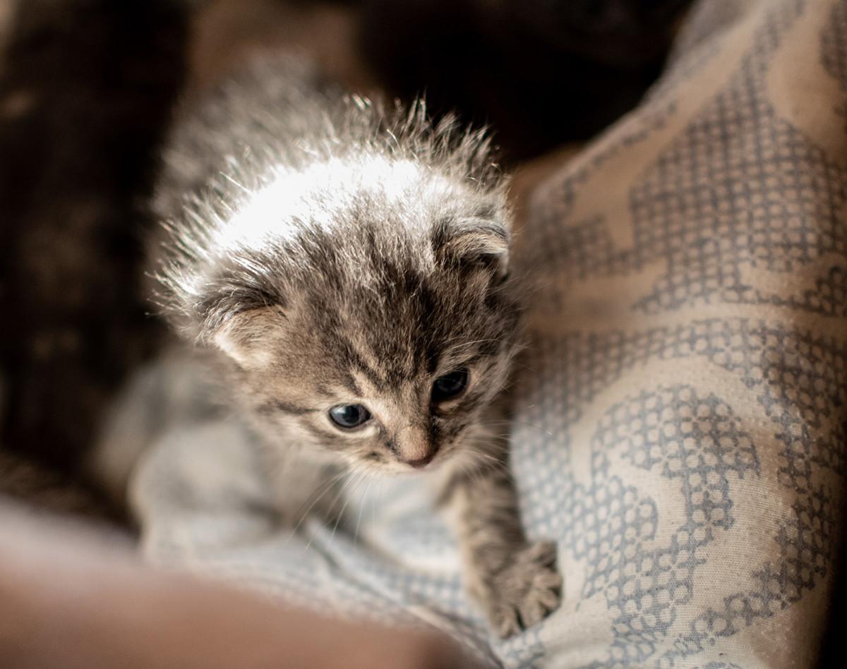 Comment bien accueillir son chaton ?