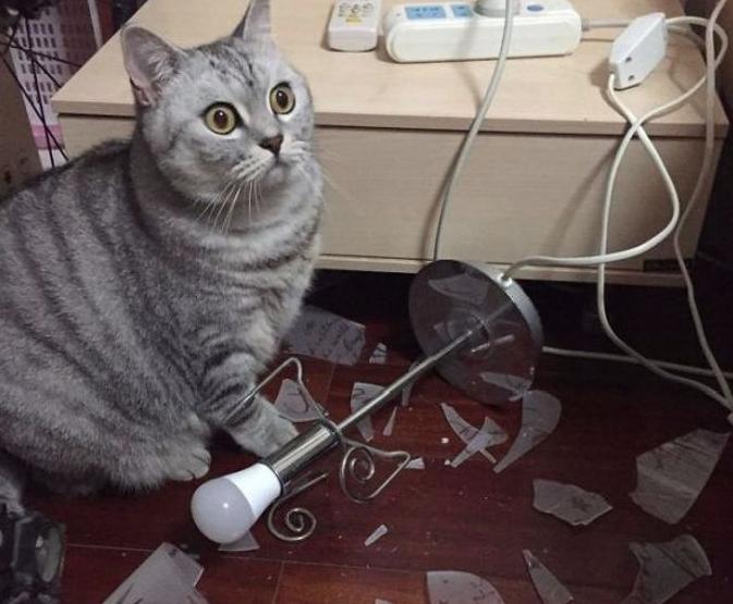 Top 20 des pires bêtises de nos chats !