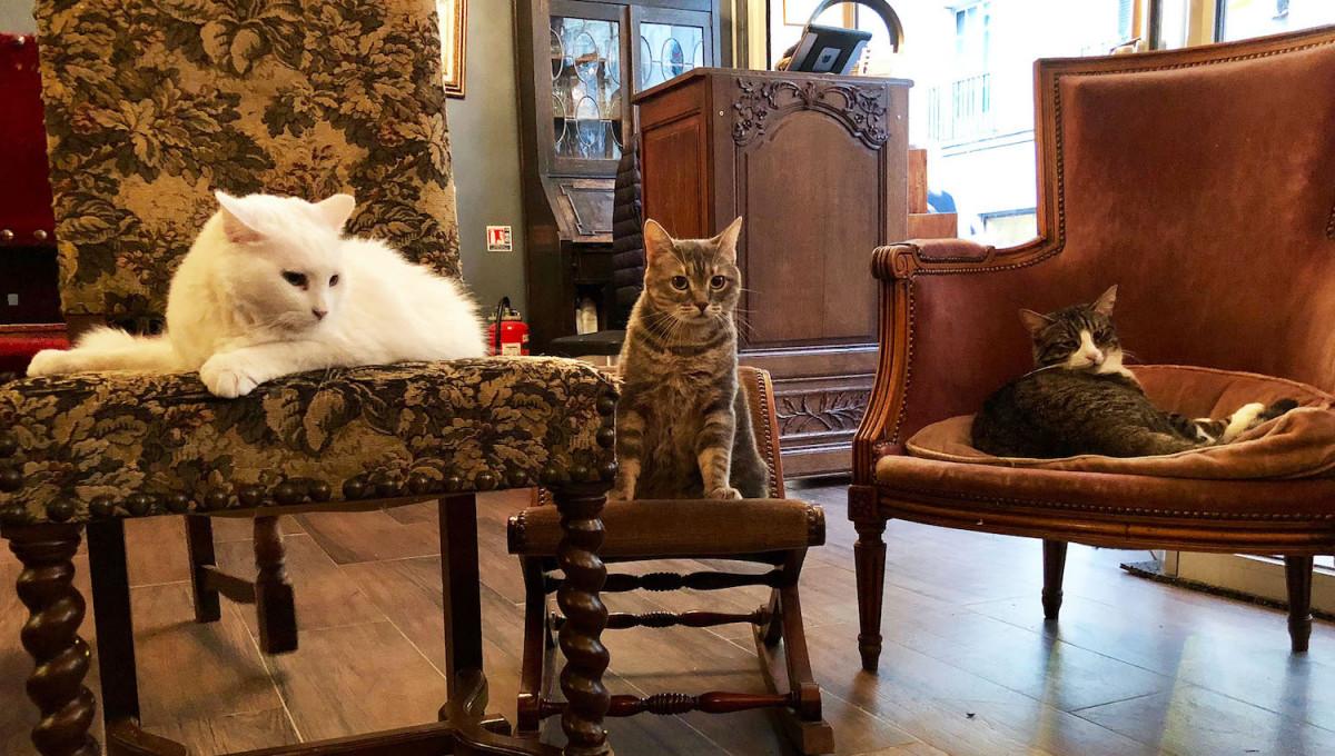 Sortie : un tour au Café des Chats à Paris