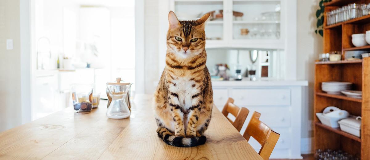 10 preuves que vous avez un chat chez vous