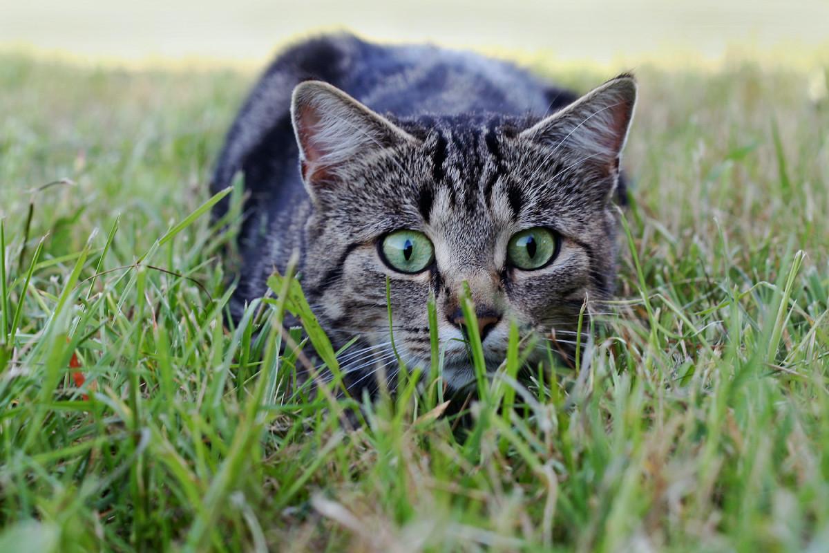 Et si on sauvait la biodiversité des griffes de nos chats ?