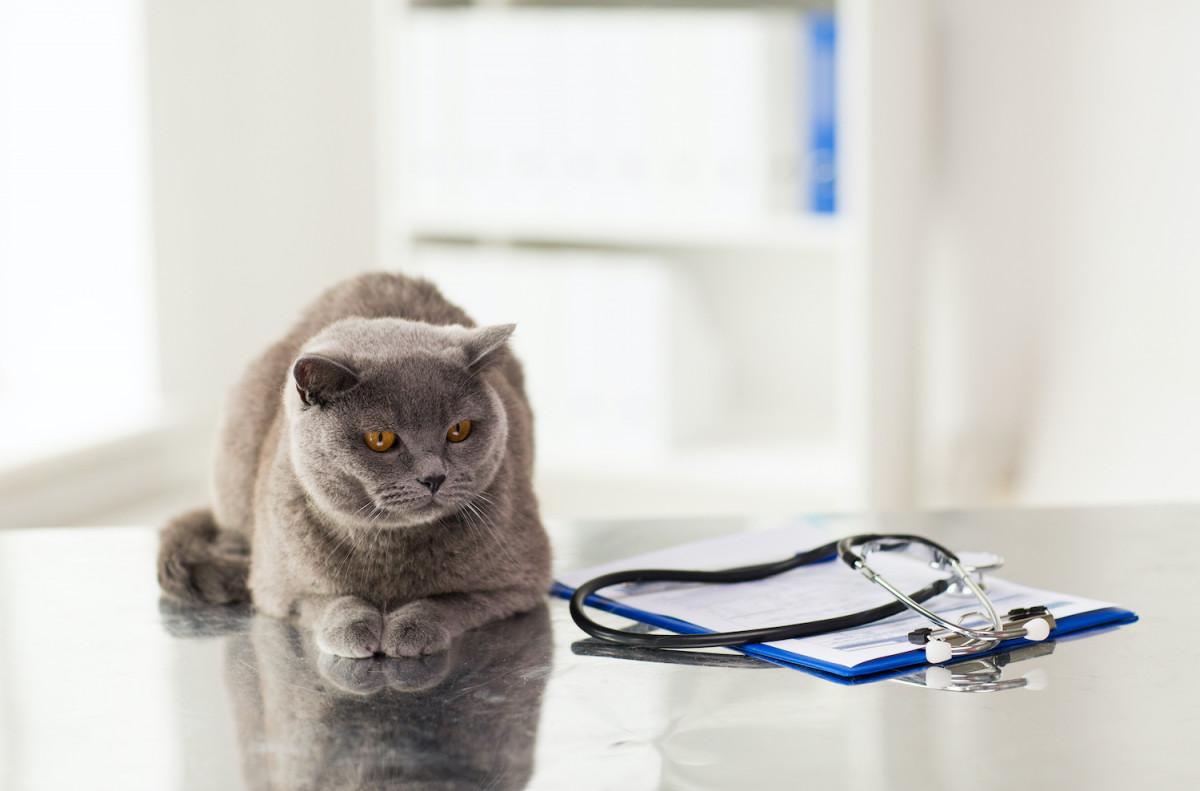 Tout savoir sur la vaccination de mon chat