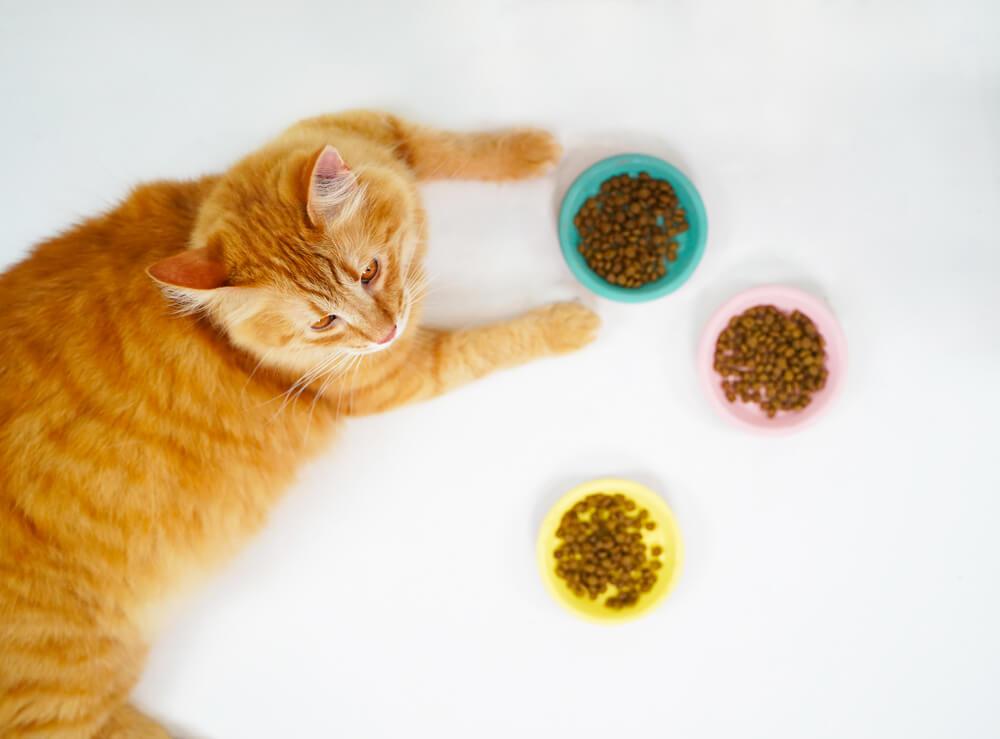 Petit lexique de l'alimentation de mon chat