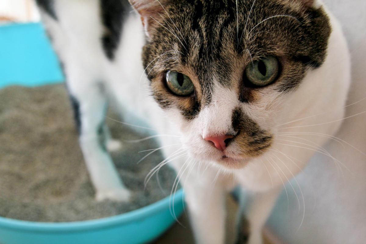 Mon chat a la diarrhée : dois-je m'inquiéter ?