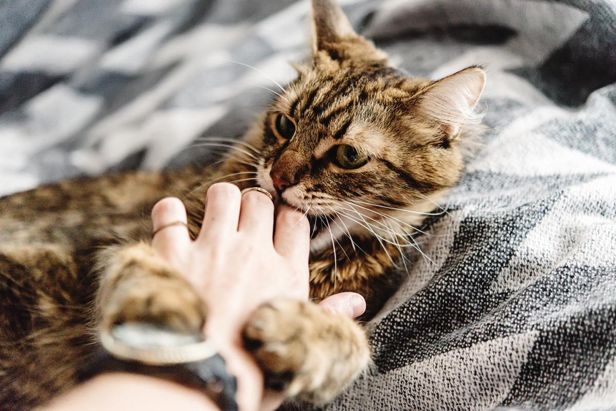 Mon chat me mord, que faire ?