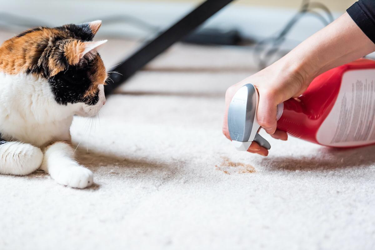 Pourquoi mon chat vomit souvent ?