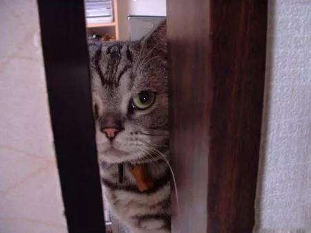 Top 10 des preuves que nos chats domineront le monde