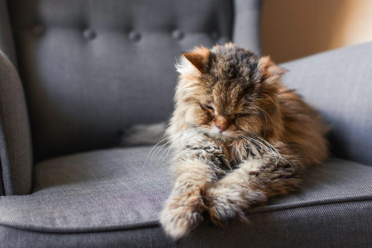Comment prendre soin de mon chat âgé ?