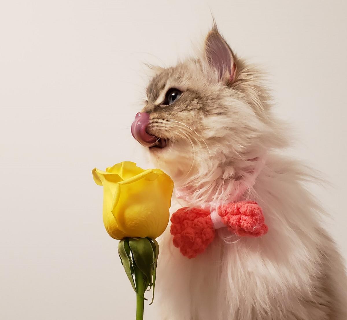 10 raisons de préférer passer la Saint Valentin avec son chat