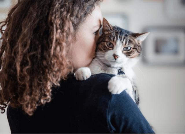 Top 10 des preuves que votre chat est comme votre enfant