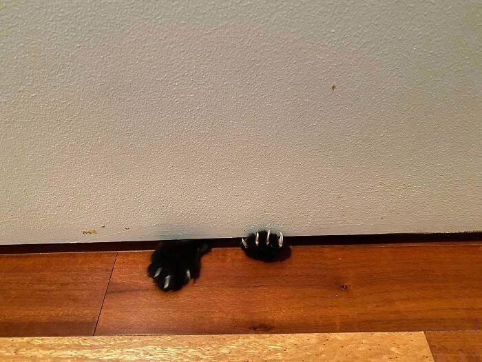 mon chat me suit partout