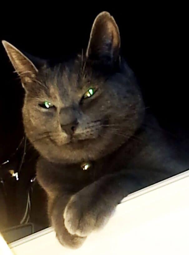 nos chats domineront le monde