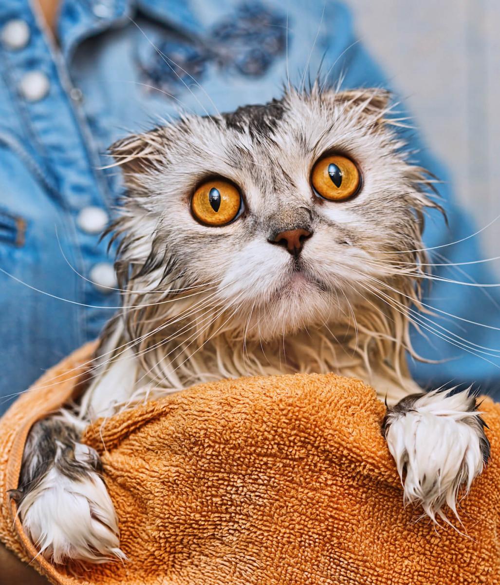 rafraichir votre chat avec un gant humide