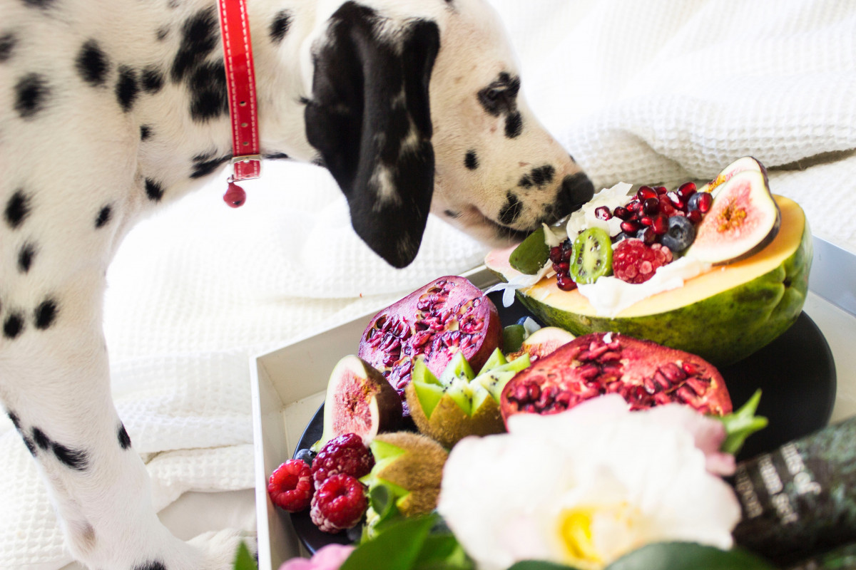 Healthy Dogs: 9 Common Health Problems To Avoid