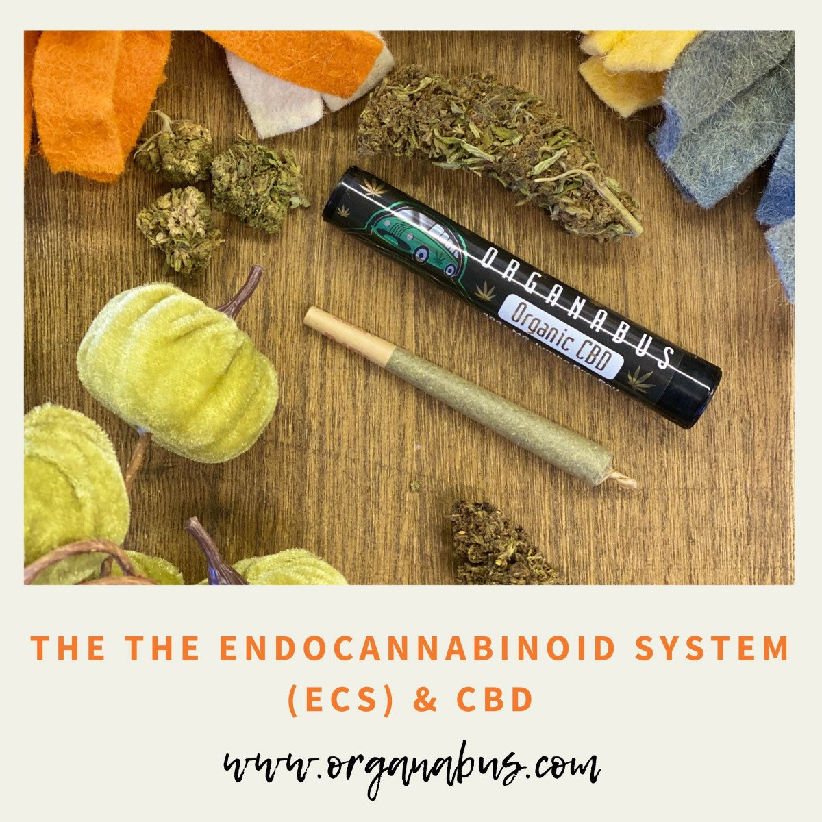 The Endocannabinoid System: Unlocking the Mystery, Vol. I