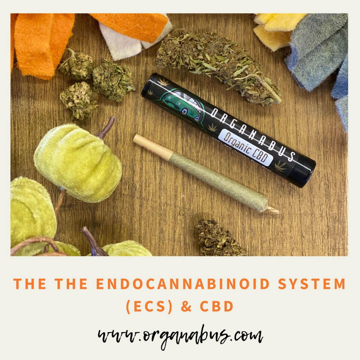 The Endocannabinoid System: Unlocking the Mystery, Vol. I