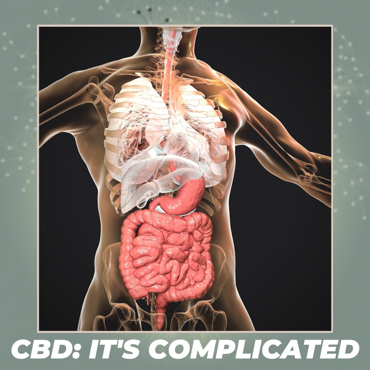 The Endocannabinoid System: CBD-Unlocking the Mystery, Vol III