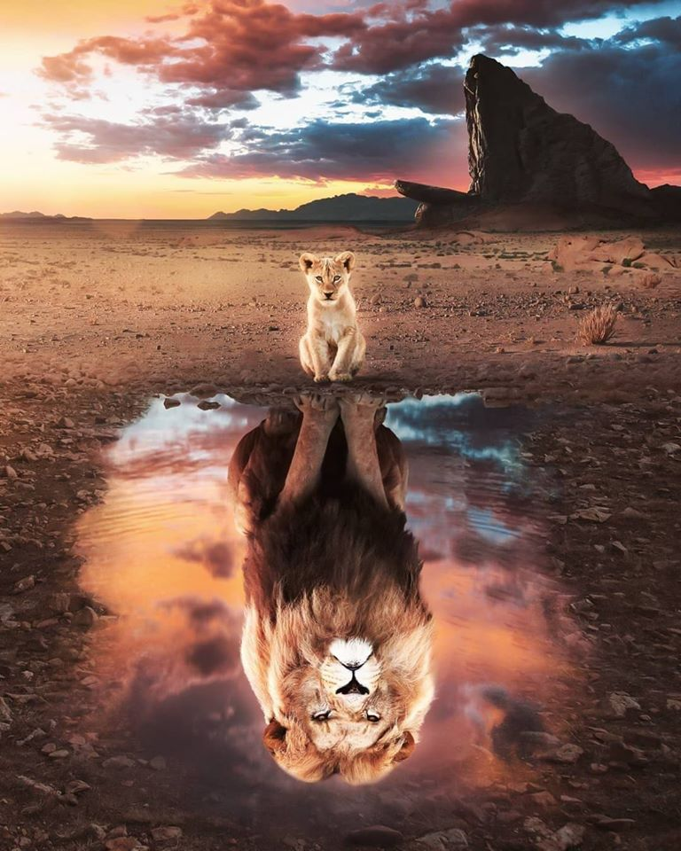 4 Ways to Get Lion Confidence
