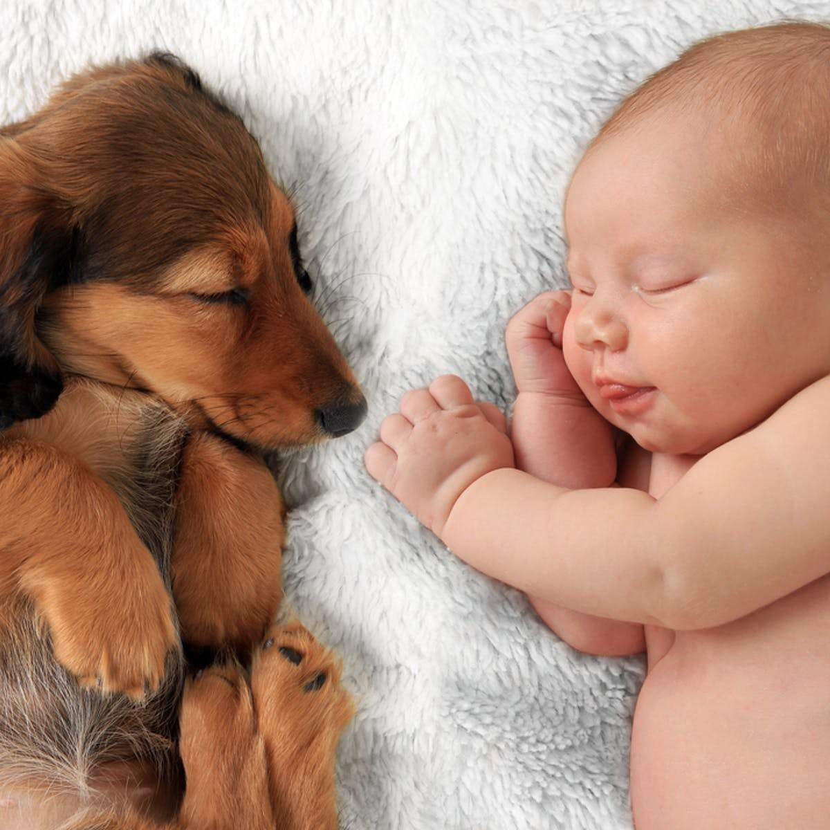 8 Tips for Baby Proofing Your Dog