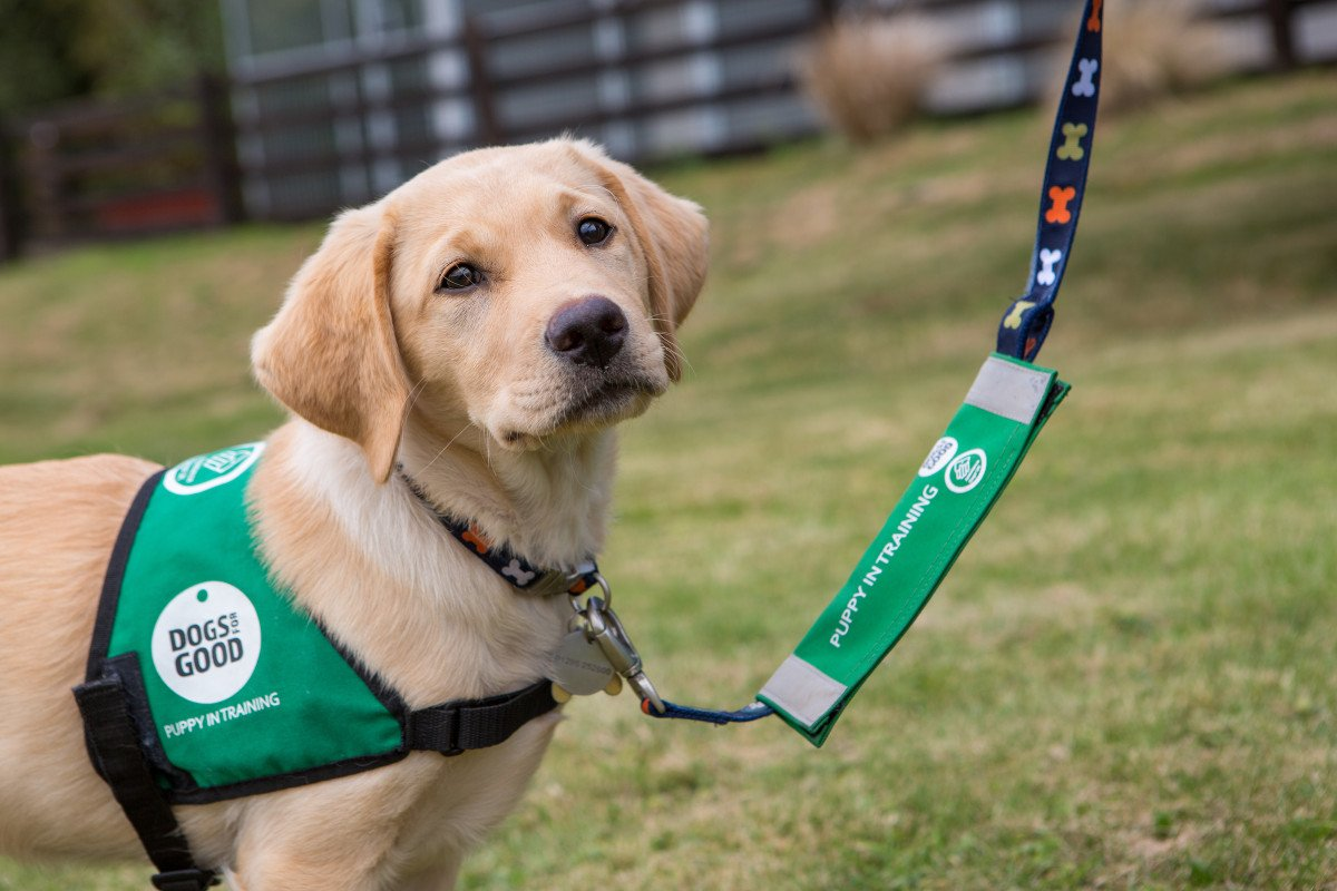 Dogs for Good Assistance dog help 11 year old, Charlie