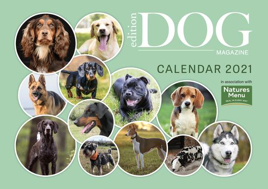 Preorder Issue 26 of Edition Dog with FREE 2021 Calendar now