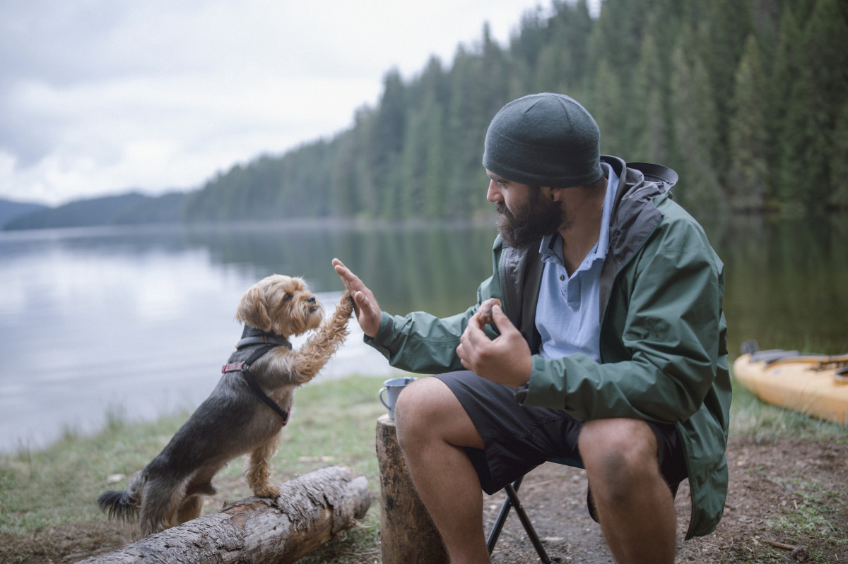 Camping with dogs: What to do and what not to do
