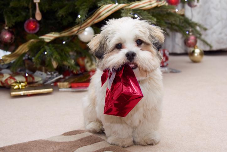 Edition Dog Christmas Collection 2021