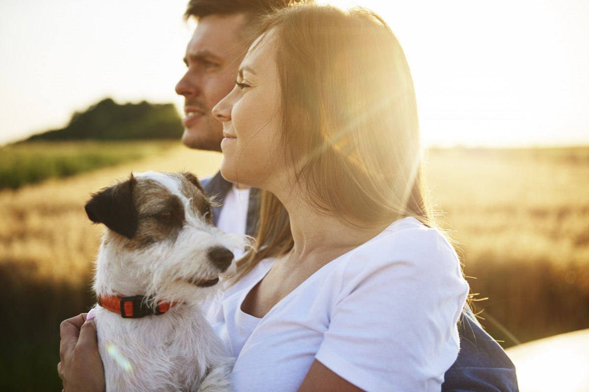Survey shows people want to get to know their dogs better