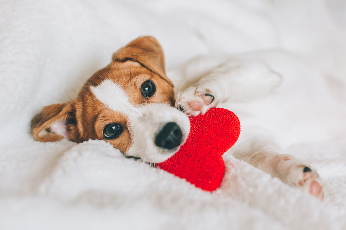 'LOVE YOUR PET DAY' How much do we love our pets?