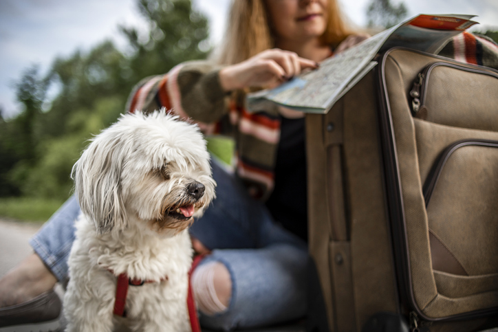RSPCA' Travel tips for UK staycations with your dogs