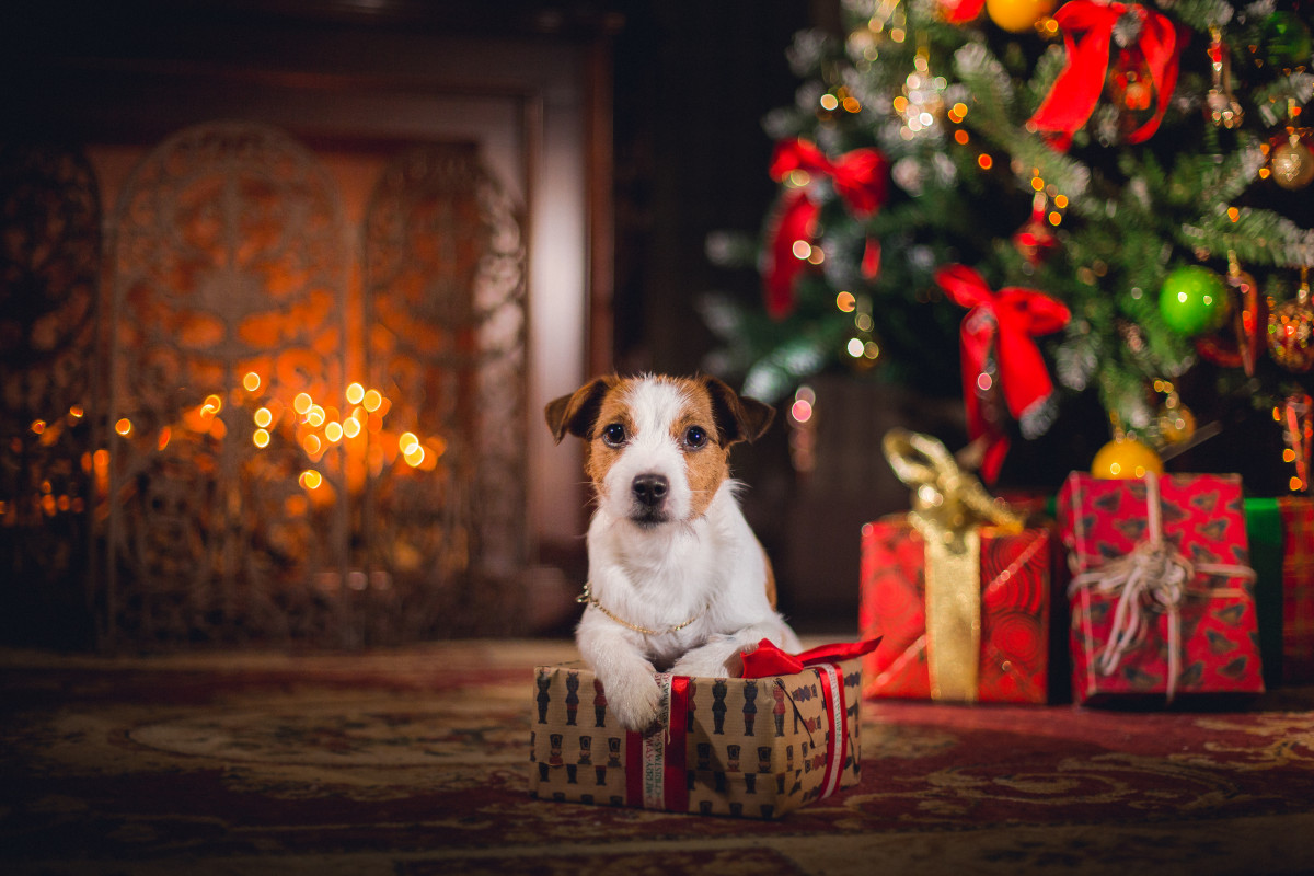 PREPARE YOUR DOG FOR A FURRY-TALE CHRISTMAS