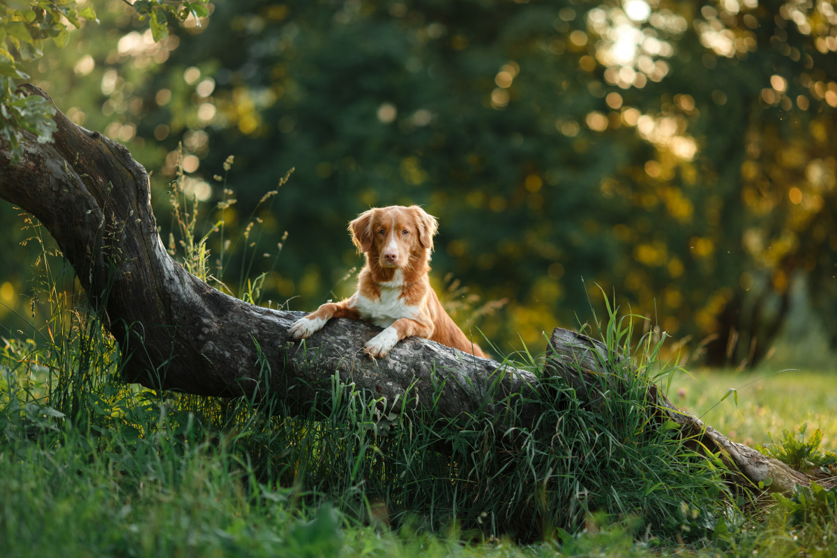 Agria is the UK's first carbon neutral pet insurer!