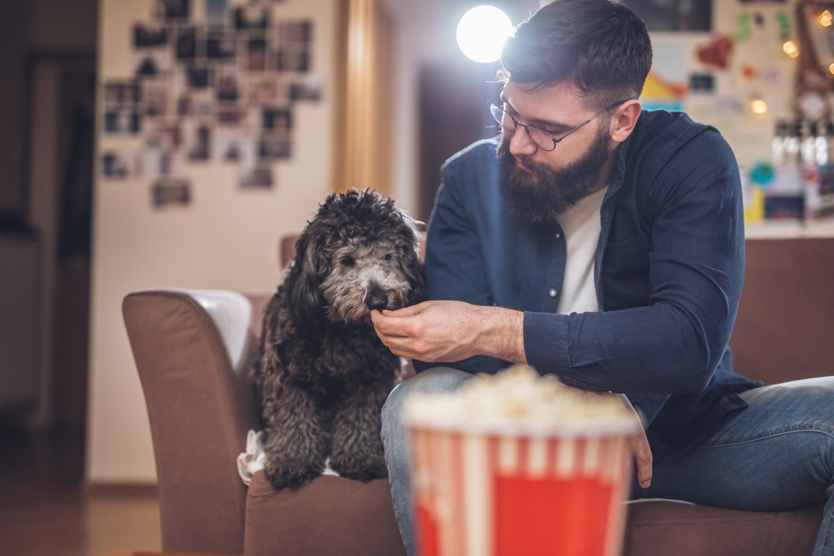 Top Dog Film Festival bounds into the UK!