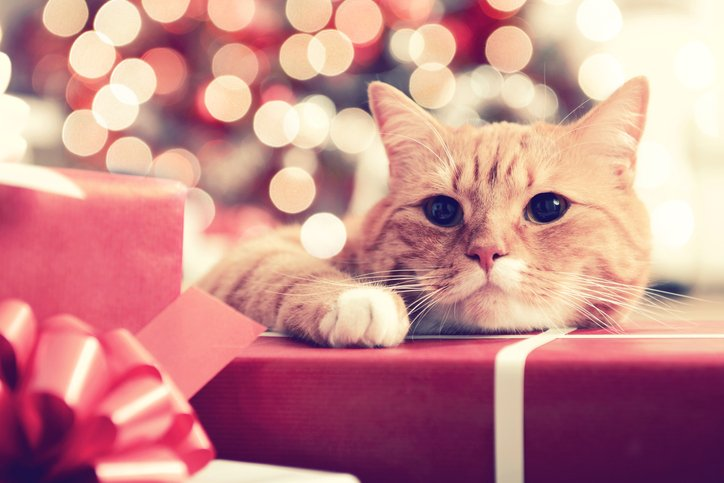 Cat Lovers Purrfect Christmas Gift Guide 2020