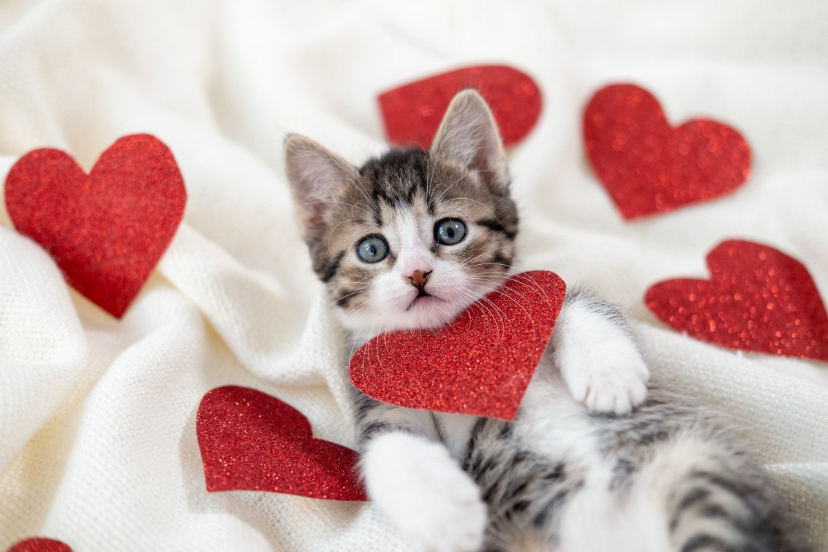Pawfect Presents? Brits to Gift Pets This Valentine's Day