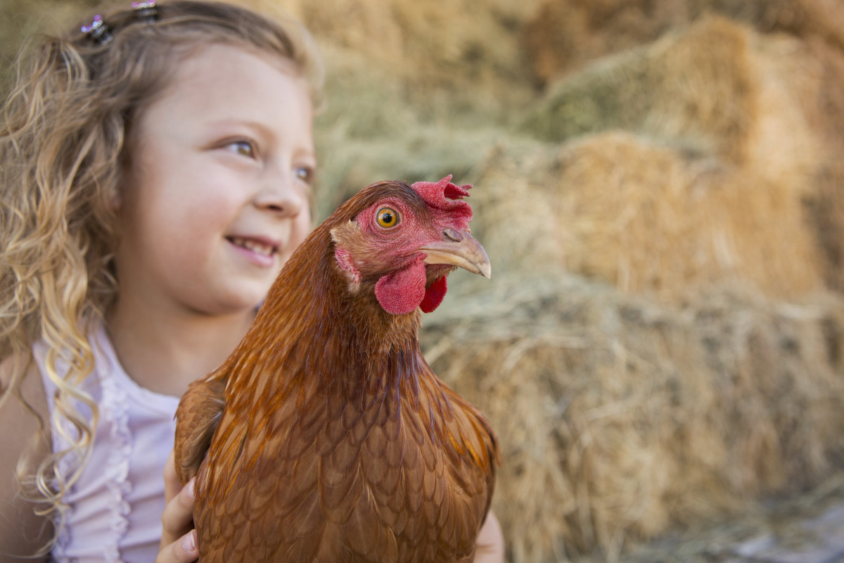 little girl with chicken