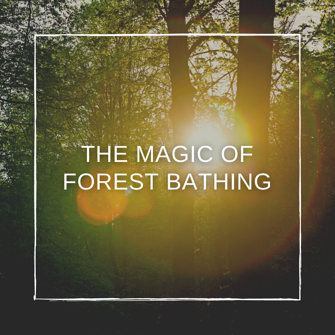 Health Trends Explained: The Magic of Forest Bathing